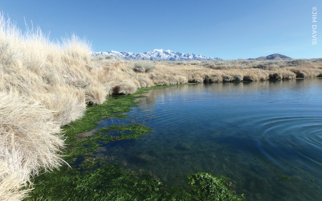Horseshoe Springs, Skull Valley, Tooele County Photo by Jim Davis. Warm, brackish groundwater issues from the Skull Valley faults at the western foot of the Stansbury Mountains to produce Horseshoe Springs—two springs that join to create a horseshoe shape.