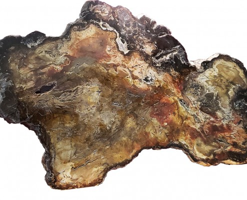 This 5-by-8-foot petrified log collected near the park was sliced into massive slabs, three of which are on display throughout Summit County. This slab is at the Courthouse in Coalville, one is at the Sheldon Richins Building at Kimball Junction, and one is at the Justice Court near the Regional Geologic Park. Photo by Tom Gadek.