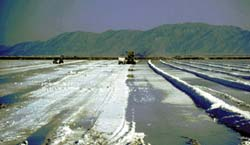 Harvesting potassium-bearing salts from large solar-evaporation pond. Salts will by processed into potassium sulfate, a mineral fertilizer.