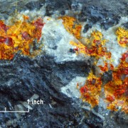 Sample of Mercur gold ore showing orpiment (orange), realgar (red), and calcite (white) in dark gray limestone.